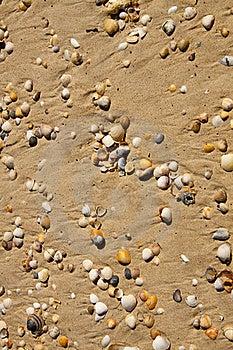Small Seashells Stock Photos - Image: 19348293