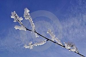 Snowy Branch Stock Photos - Image: 19348953
