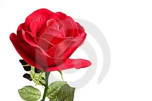 Fabric Rose Royalty Free Stock Photo - Image: 19361905