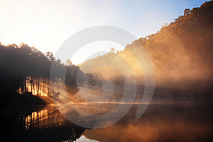 Reflection Of Forest Royalty Free Stock Images - Image: 19362839