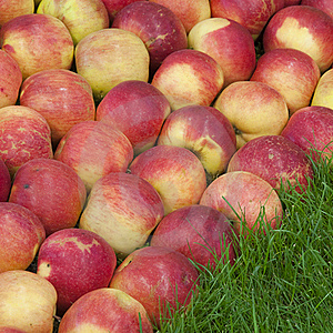 Apples Stock Photography - Image: 19363692