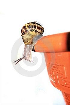 Curious Snail Stock Image - Image: 19366831