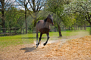 Brown Horse In Jump Royalty Free Stock Photography - Image: 19367307