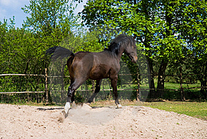 Brown Horse In Jump Royalty Free Stock Photos - Image: 19367358