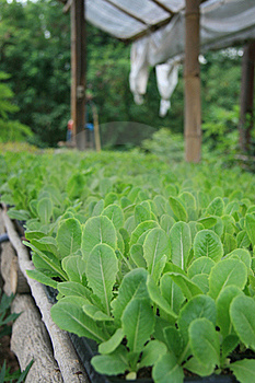 Vegetable Organic 09 Royalty Free Stock Image - Image: 19367616