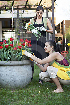 Two Women Gardening Royalty Free Stock Image - Image: 19370796