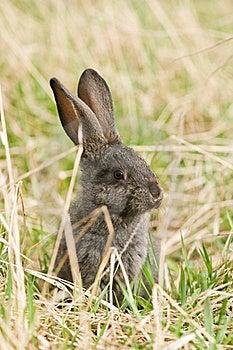 Rabbit Stock Photo - Image: 19372760