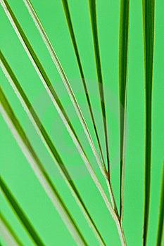 Leaf Stock Image - Image: 19372801