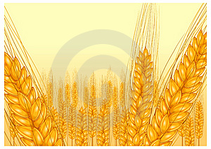 Ripe Ear Wheat Royalty Free Stock Images - Image: 19373579