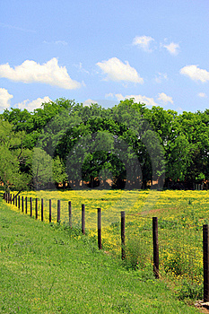 Pasture With Yellow Flowers And Fence Royalty Free Stock Photography - Image: 19388717