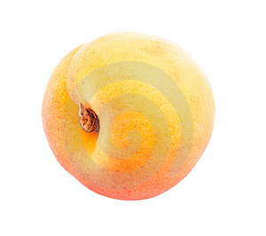 One Apricot. Royalty Free Stock Image - Image: 19392156