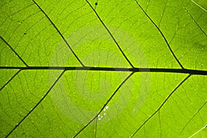 Leaf Texture Stock Photos - Image: 19398703