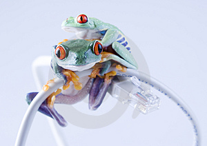 Web frog Stock Photography
