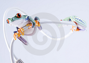 Frog Royalty Free Stock Image - Image: 1946496