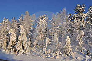 Frozen Forest Royalty Free Stock Photography - Image: 19403967