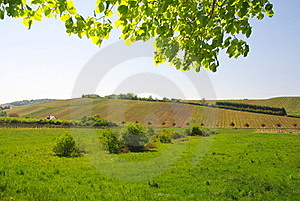Wineland Royalty Free Stock Images - Image: 19419669