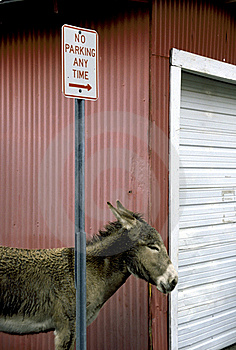 Burro In Desert Royalty Free Stock Photography - Image: 19422607