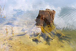 Old Stump Of A Tree In A Forest Lake Royalty Free Stock Image - Image: 19424276