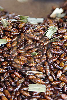 Thai Insect Food Stock Image - Image: 19425271