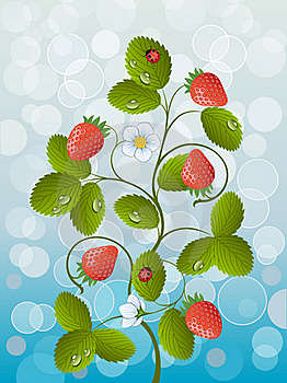 Strawberry Royalty Free Stock Photos - Image: 19426418