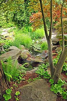 Botanical Forest Stock Images - Image: 19429684