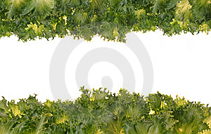 Fresh Organic Green Vegetable Leaf On White Royalty Free Stock Photography - Image: 19442347