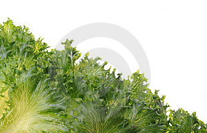 Fresh Organic Green Vegetable Leaf On White Royalty Free Stock Image - Image: 19442406