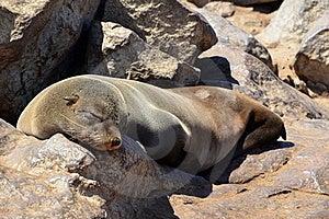 Restful Sleep Royalty Free Stock Image - Image: 19443716