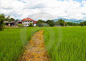 Path Farm Royalty Free Stock Photography - Image: 19454637
