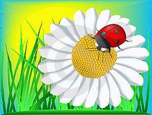 Ladybird And Camomile Royalty Free Stock Photo - Image: 19455025