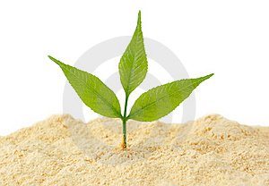 Young Sprout Grows From Sand Royalty Free Stock Image - Image: 19457286