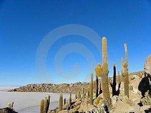 Incahuasi Island. Salar De Uyuni. Bolivia. Stock Images - Image: 19462474
