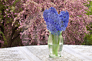 Purple Hyacinths, Lace Tablecloth And Blossoms Royalty Free Stock Image - Image: 19470156