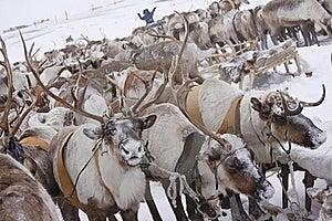 Deer Stock Image - Image: 19497251