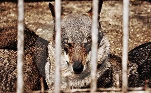 Wildlife In Bondage Stock Photos - Image: 19502843