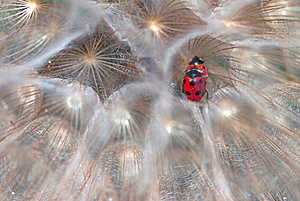 Ladybirds Royalty Free Stock Photography - Image: 19503847