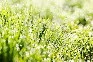The Dew In Fresh Grass Stock Photos - Image: 19512543