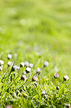 The Dew In Fresh Grass Royalty Free Stock Photos - Image: 19512558