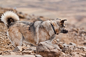 A Grey Dog On A Strole. Royalty Free Stock Photography - Image: 19517457