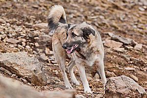 A Grey Dog Looking To The Left. Royalty Free Stock Photography - Image: 19517477