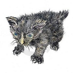 Hand-drawn Newborn Kitten Royalty Free Stock Photos - Image: 19528418