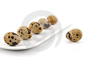 Quail Eggs Stock Images - Image: 19536424