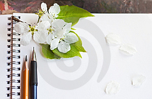 For Sketches Royalty Free Stock Image - Image: 19538816