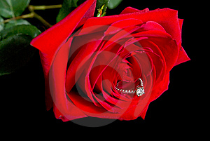 Diamond Rose Stock Photography - Image: 19546122