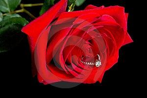 Diamond Rose Stock Photography - Image: 19546122