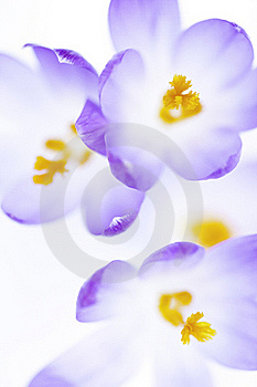 Unique Flowers Stock Photos - Image: 19549983