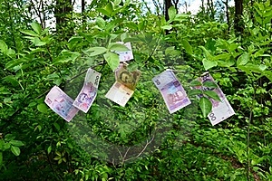 Money Grows On Trees Royalty Free Stock Photo - Image: 19553695