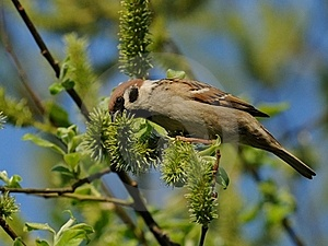 Sparrow Stock Photography - Image: 19554992