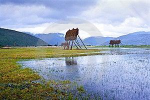 Barley Shelves Landscape Royalty Free Stock Photos - Image: 19555928