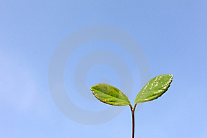 Green Leaves And The Blue Sky Stock Images - Image: 19559774